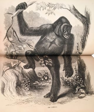Explorations and Adventures in Equatorial Africa; With Accounts of the Manners and Customs of the People, And of the Chase of the Gorilla, The Crocodile, Leopard, Elephant, Hippopotamus, and Other Animals